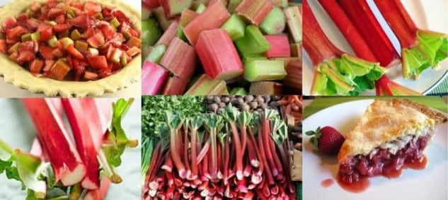 Lenox Rhubarb Festival @ Library Reading Park | Lenox | Massachusetts | United States